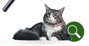 Productvinder voor katten