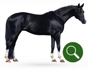 Productvinder voor paarden