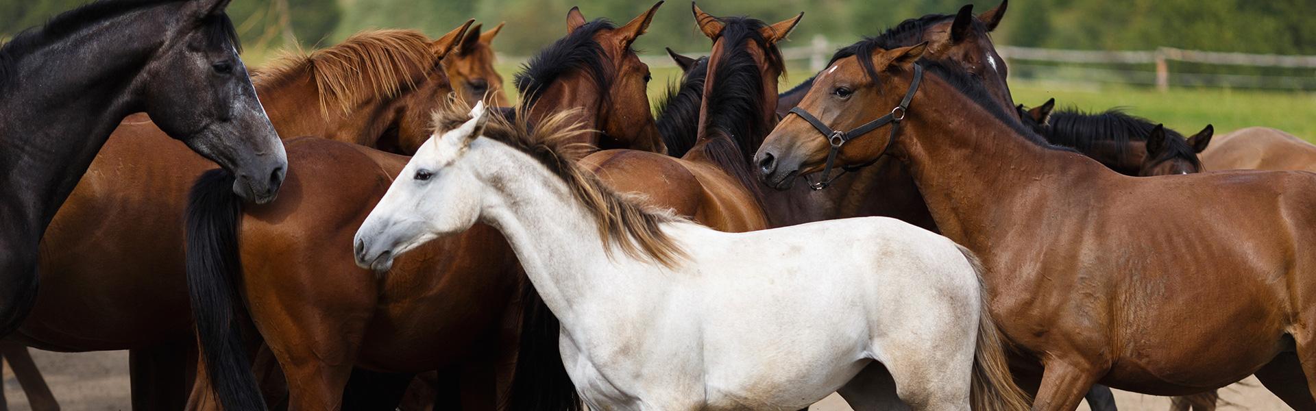AniForte® - Perfect voor paarden