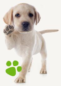AniForte® Garantie - 100% zonder dierproeven