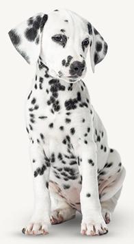 NIEUW - Sets voor honden