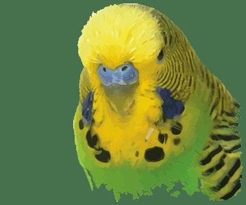 Vogel (Aves)
