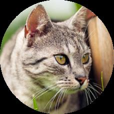 Producten voor katten