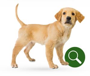 Productvinder voor honden