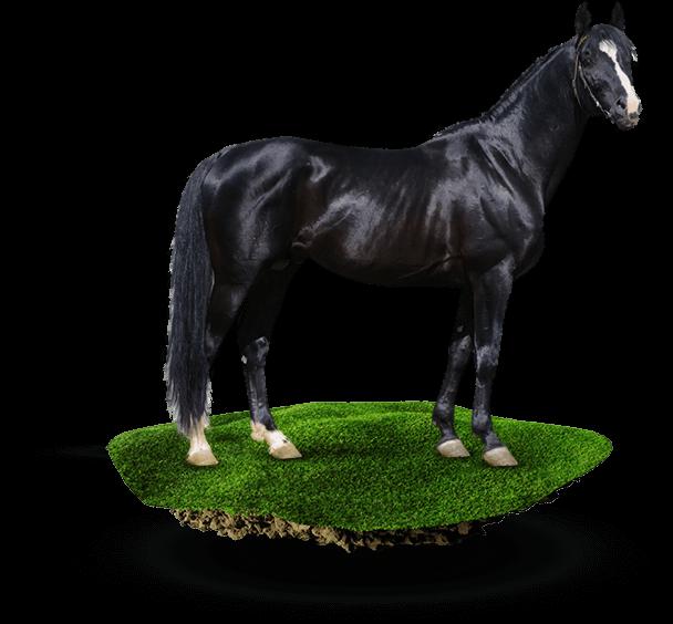 Producten voor paarden